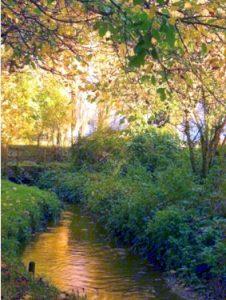 Stillness - Quiet Day